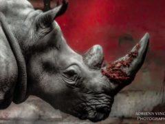 endangered_SC-1024x683